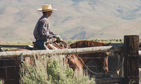 Cattleman riding the fences